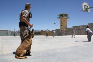 How Police Dogs get training for Several Activities?