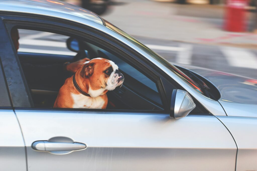 Carry your pooch securely in a vehicle